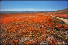 Antelope Valley - I grew up near here