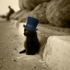 formal wear, kitty cats, kitten, blue, like a sir, black cats, top hats, eye, animal