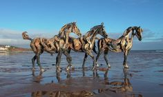 Heather Jansch's driftwood horse sculptures in Devon