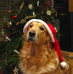 Golden Retriever Christmas Tree