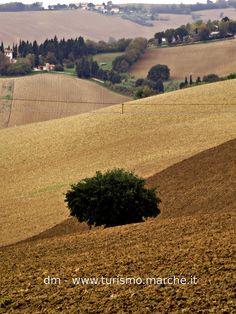 Autumn field - Marche, Italy