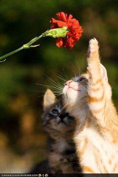 Kittens & Carnation