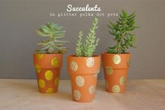 How to make Potted Succulent Gifts
