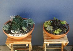 succulent bowl, by thesmartestfish, via Flickr