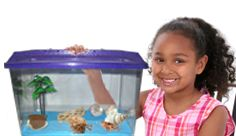 Hermit crabs for the classroom