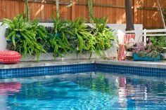 fern, living walls, woolli pocket, vertic garden, live wall, pool, pockets, wall gardens, wall planters