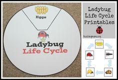 Free Ladybug Printables from Teaching Mama