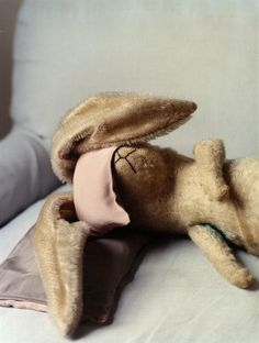 oh bunny