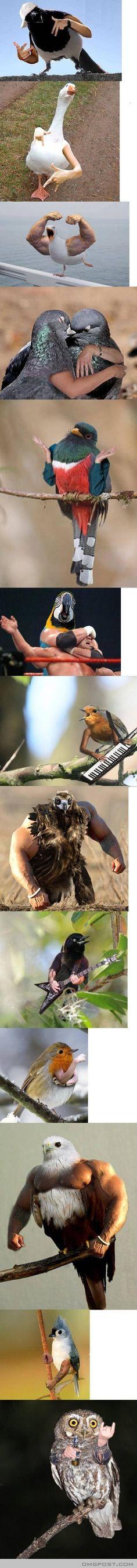 Funny Bird Photo: Birds Humanoid ~ Funny