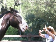 Setting Boundaries with Your Horse