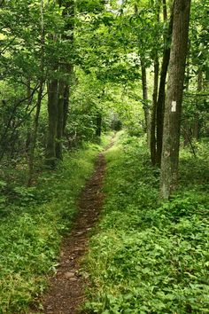 Trail to Bearfence Mountain in Shenandoah National Park, Virginia