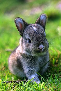 The cutest bunny