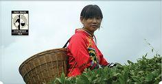 Numi Fair Trade Tea in China
