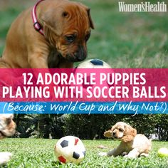 12 Adorable Puppies Playing With Soccer Balls (Because World Cup. And why not?)