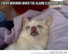 Why, yes, this is exactly how I look when my alarm goes off.
