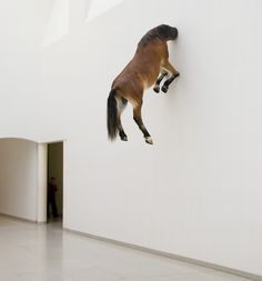 Horse in Wall by Maurizio Cattelan