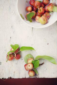 Where the Apple Trees Are :: Cannelle et VanilleCannelle et Vanille