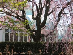 NY Botanical Garden Spring 2014
