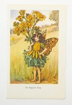 Ragwort Fairy Picture by Mary Cicely Barker £4.50