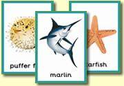 Zelf Ned. tekst toevoegen: Posters - Animals - Sea Life
