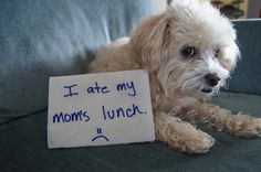 Dog Shaming!  Lol!
