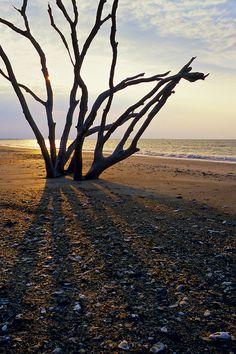 Boneyard Beach at Botany Bay, Edisto Island, SC