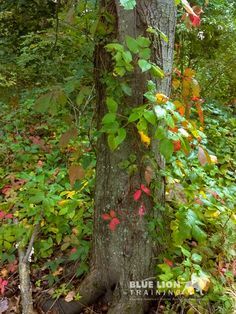 """Not such a """"fun"""" find, but a necessary one. Here is a guide on how to Identify the different forms of Poison Ivy so  that no one gets hurt enjoying the outdoors."""