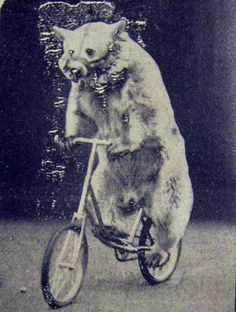 performing-bear Aug 1938