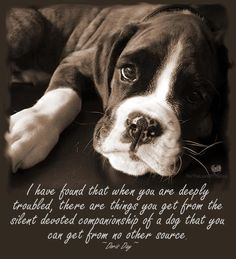 Dog's give the best therapy and love. anim, dogs, boxer puppies, pet, true stori, dog quotes, boxers, doris day, friend