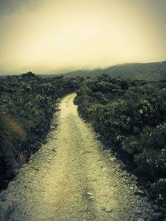 Heaphy Track, Kahurangi National Park, South Island, NZ