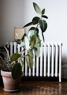 good plant