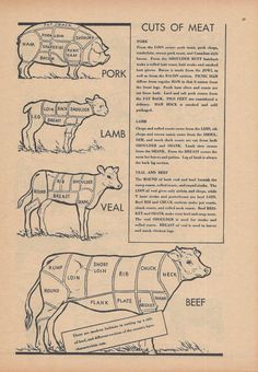 Butcher, Meat, Kitchen Decor, Vintage Illustration, 1940s, Double Sided Print, Cows, Dairy Cattle, Beef Cattle, Farm Animals