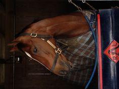 Keeneland - Horse