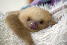 fluffy baby animals - Google Search