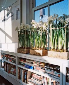 paperwhites - good idea for keeping them upright