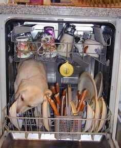 "The newest in ""green"" dishwashing technology. Runs on Kibbles n Bits."