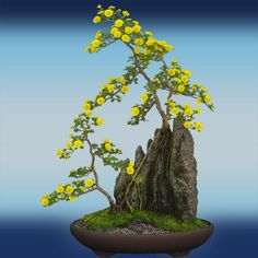 Unique Bonsai Trees with yellow flowers