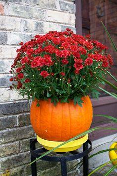 Pumpkin with flowers inside!