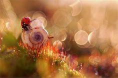 gorgeous macro photography!! stunning photography, nature, magical garden, macro photography, bug, magic garden, morning dew, magdalena wasiczek, snail