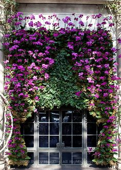 A curtain of orchids drapes over the doors into the music room at Longwood Gardens, Philadelphia