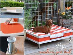 modern pet, pet beds