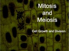 Mitosis and Meiosis (Cell Growth and Division) Powerpoint and Notes.  This powerpoint is on Mitosis and Meiosis (Cell Growth and Division). It consists of 55 slides that are colorful, informative and visually stimulating.