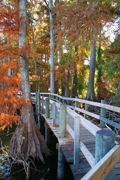 Wooden path at Reelfoot Lake in Tennessee