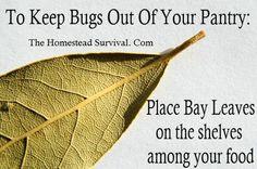 kitchen tips, keep bugs away, foods, bay leav, homestead survival, bays, food storage, pantries, leaves