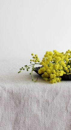 Mimosa <3