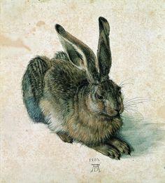 rabbit, field, draw, anim, ador artist