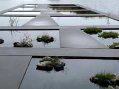Detail of Water Garden, Bordeaux Botanical Garden. La Bastide, Bordeaux, France. 2000–02