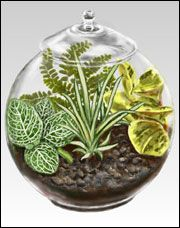 This has a wonderful table of the types of plants that will survive in terrariums, along with all of their requirements.  Refreshing!