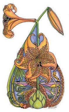 Tiger-lily Sue Coccia