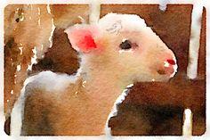 Sheep watercolor by artist Lisa Sims